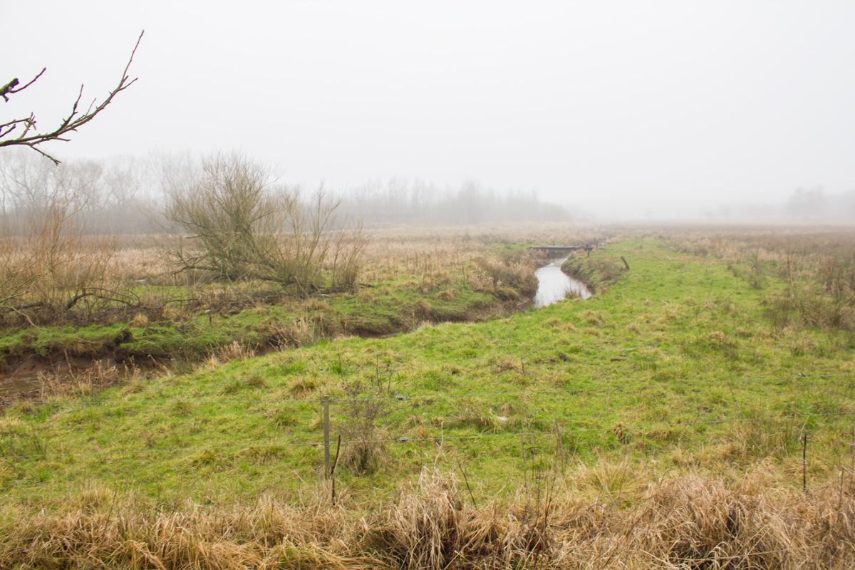Fovrfeld Bæk flyder over sine bredder under kraftige regnskyl.